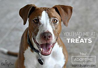 Hound (Unknown Type)/Terrier (Unknown Type, Medium) Mix Dog for adoption in west berlin, New Jersey - Mina