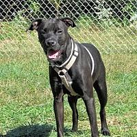 Adopt A Pet :: Luna - Batavia, OH