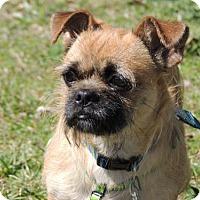 Adopt A Pet :: CHIP - Franklin, TN