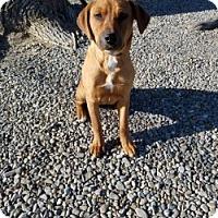 Adopt A Pet :: MANDY - Gustine, CA