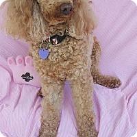 Adopt A Pet :: Libby - Wellington, FL