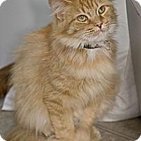 Adopt A Pet :: Adele - Grand Rapids, MI