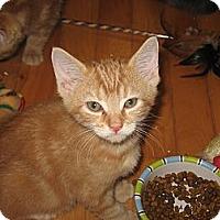 Adopt A Pet :: Simon - Portland, ME