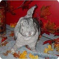 Adopt A Pet :: Serena - Roseville, CA