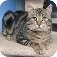 Adopt A Pet :: Salvador - Anchorage, AK