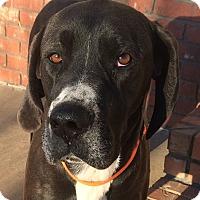Adopt A Pet :: *Claire - PENDING - Westport, CT