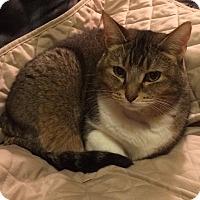 Adopt A Pet :: Penny - Wayland, MI