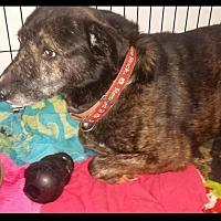 Adopt A Pet :: *AARF* - Moon - Detroit, MI