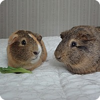 Adopt A Pet :: Pumpkin and Spike - Pine Bush, NY