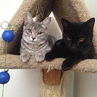 Adopt A Pet :: MIRA, LICORICE, NALA, and SIMBA - Pt. Richmond, CA
