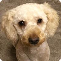 Adopt A Pet :: Crispin - Adoption Pending - Gig Harbor, WA