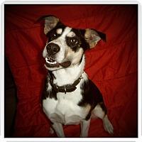 Adopt A Pet :: MAGGIE - Medford, WI