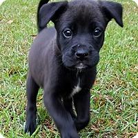 Adopt A Pet :: Tilly - Groton, MA