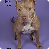 Adopt A Pet :: June  (Foster Care) - Baton Rouge, LA