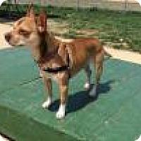 Adopt A Pet :: Gizmo - Mechanicsburg, OH
