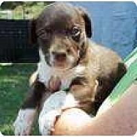Adopt A Pet :: Carly (pending adoption) - Adamsville, TN