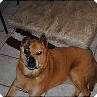 Adopt A Pet :: Mr. Burns - Los Angeles, CA