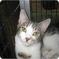 Adopt A Pet :: Webster - Deerfield Beach, FL