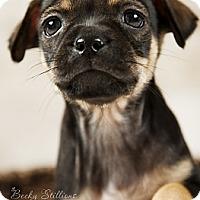 Adopt A Pet :: Milah - Wytheville, VA