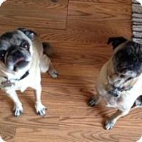 Adopt A Pet :: Bruiser - Strasburg, CO
