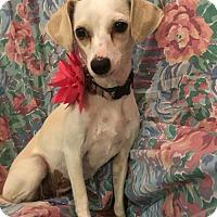 Adopt A Pet :: Mattie - Tomball, TX