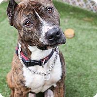 Adopt A Pet :: Tyson - Union, NJ