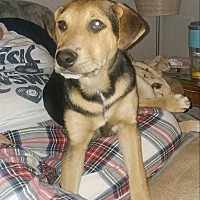 Adopt A Pet :: Crash - Richmond, KY