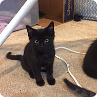 Adopt A Pet :: Wylie - Colorado Springs, CO
