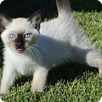 Adopt A Pet :: Tea: Earl Grey - Corona, CA