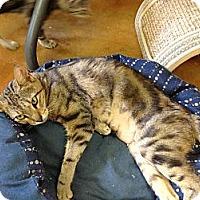 Adopt A Pet :: Sassy - Lake Charles, LA