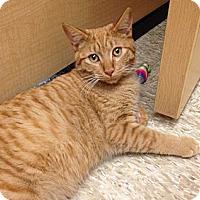 Adopt A Pet :: Alton - Monroe, GA