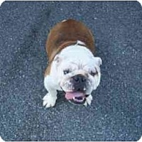 Adopt A Pet :: Shadow - conyers, GA