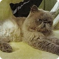 Adopt A Pet :: Vinnie - Beverly Hills, CA