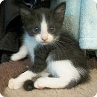 Adopt A Pet :: Evie - Reston, VA
