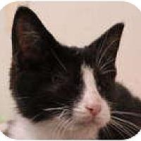Adopt A Pet :: Hunter - Kensington, MD
