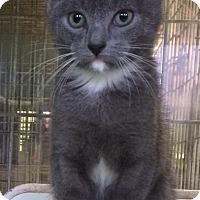 Adopt A Pet :: Duane - New York, NY