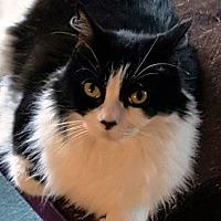 Adopt A Pet :: Hope - Pasadena, CA