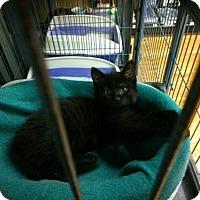 Adopt A Pet :: Jessie - Hamilton, ON