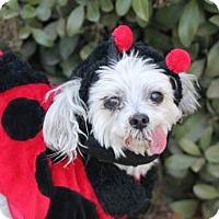Adopt A Pet :: Chesty - Creston, CA
