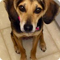 Adopt A Pet :: Bella - Shelter Island, NY