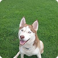 Adopt A Pet :: Rana - Norman, OK
