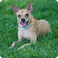Adopt A Pet :: Frankie - Washoe Valley, NV