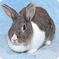 Adopt A Pet :: Lily - Encinitas, CA