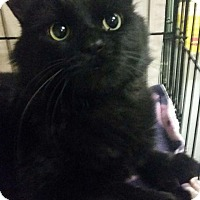 Adopt A Pet :: Blackie - Chisholm, MN