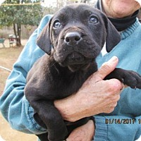 Adopt A Pet :: HARRY - Williston Park, NY
