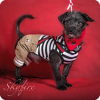 Adopt A Pet :: Pixel - San Diego, CA