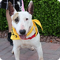 Adopt A Pet :: YUKI - Las Vegas, NV