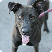Adopt A Pet :: Ebony - Canoga Park, CA