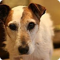 Adopt A Pet :: MacArthur - hartford, CT