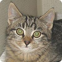 Adopt A Pet :: SHOCKER - 2013 - Hamilton, NJ